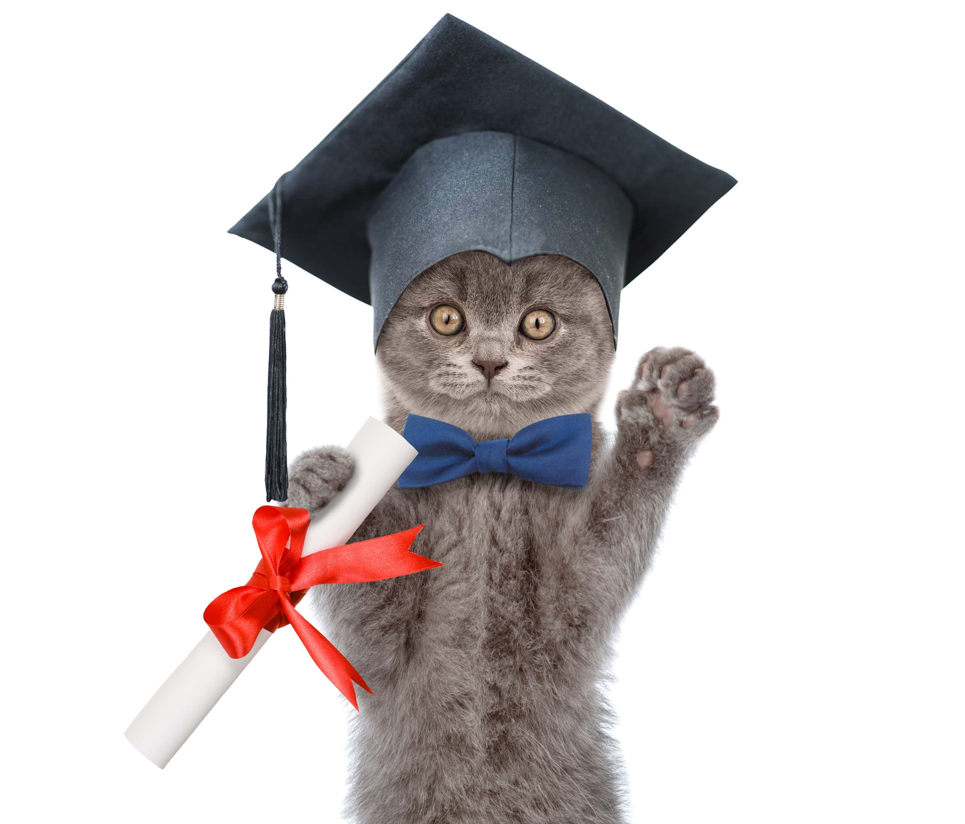 AdobeStock 155487213 chat diplômé min 1
