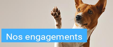 title engagements xsmall 1