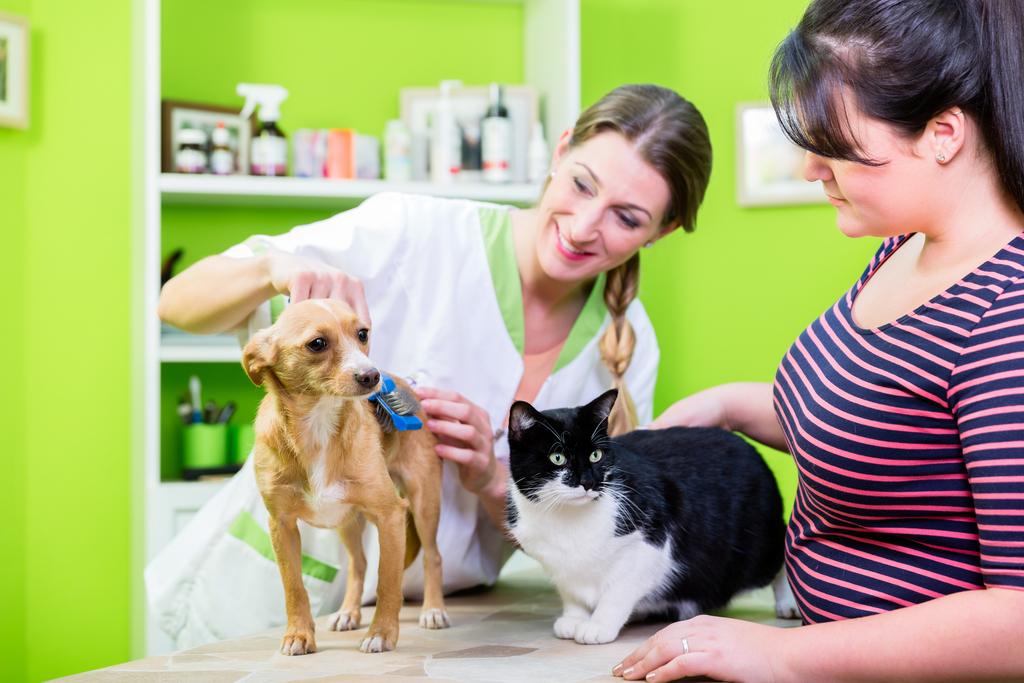 une ASV prenant soin d'animaux