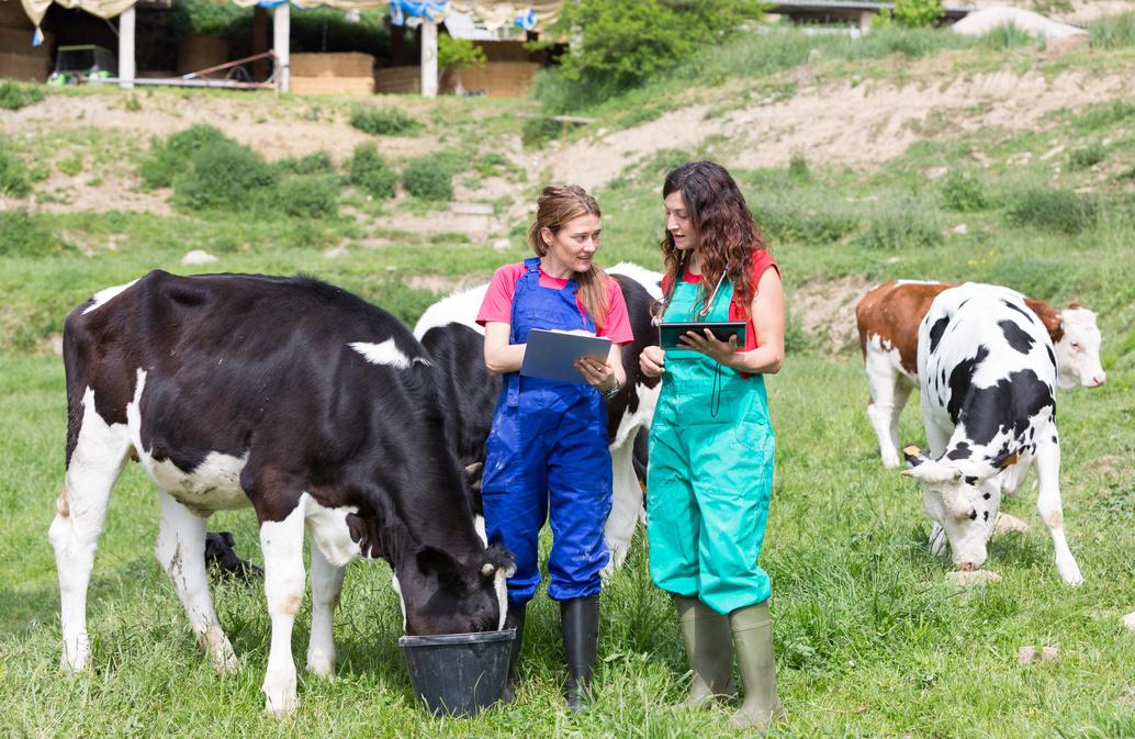 ASV en médecine vétérinaire rurale