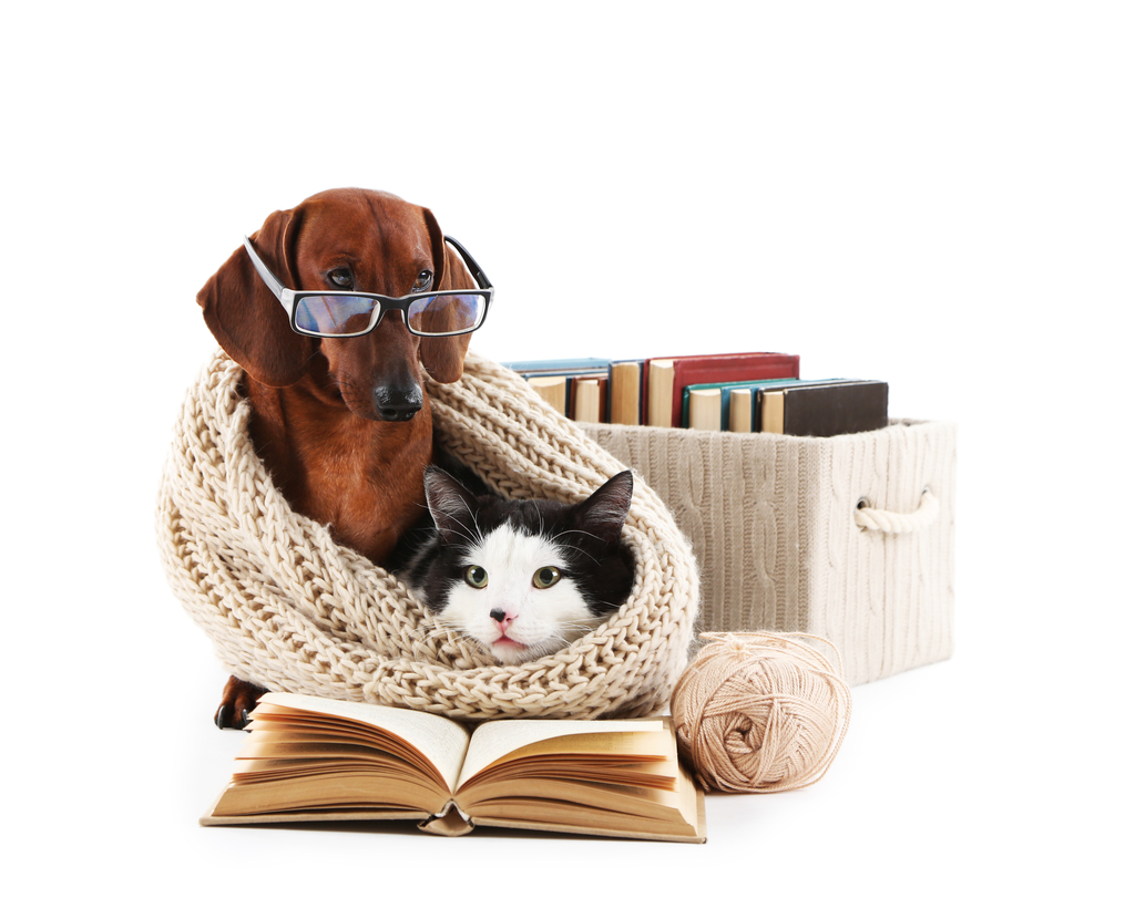 Chien et chat qui étudient