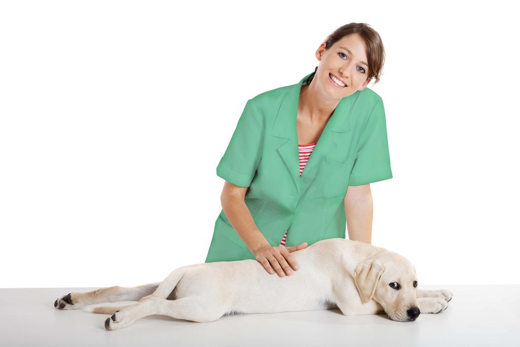 ASV avec un chien