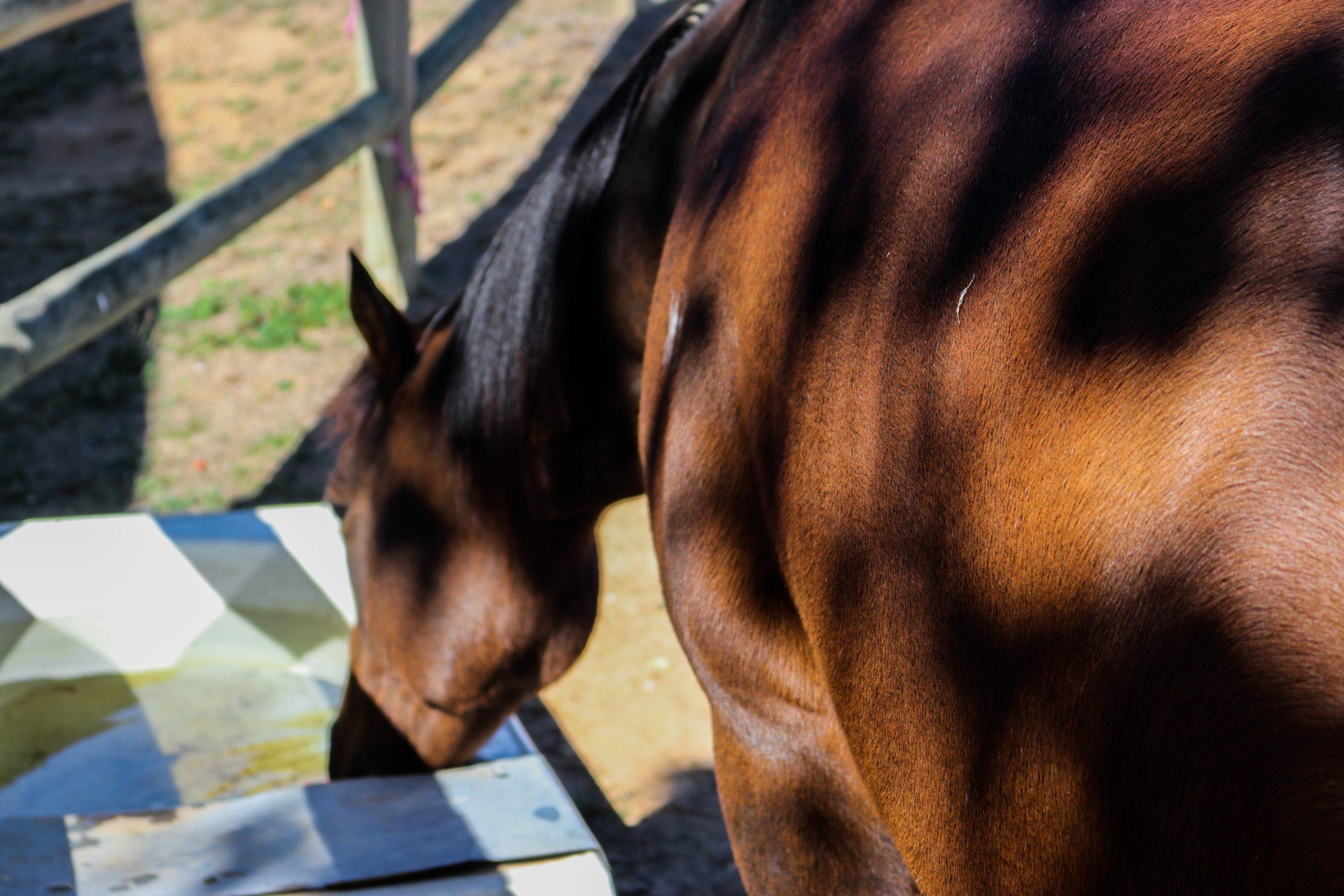 Equin ASV