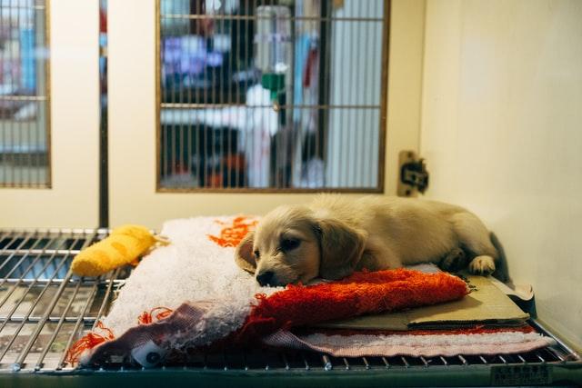 devenir assistant vétérinaire reconversion